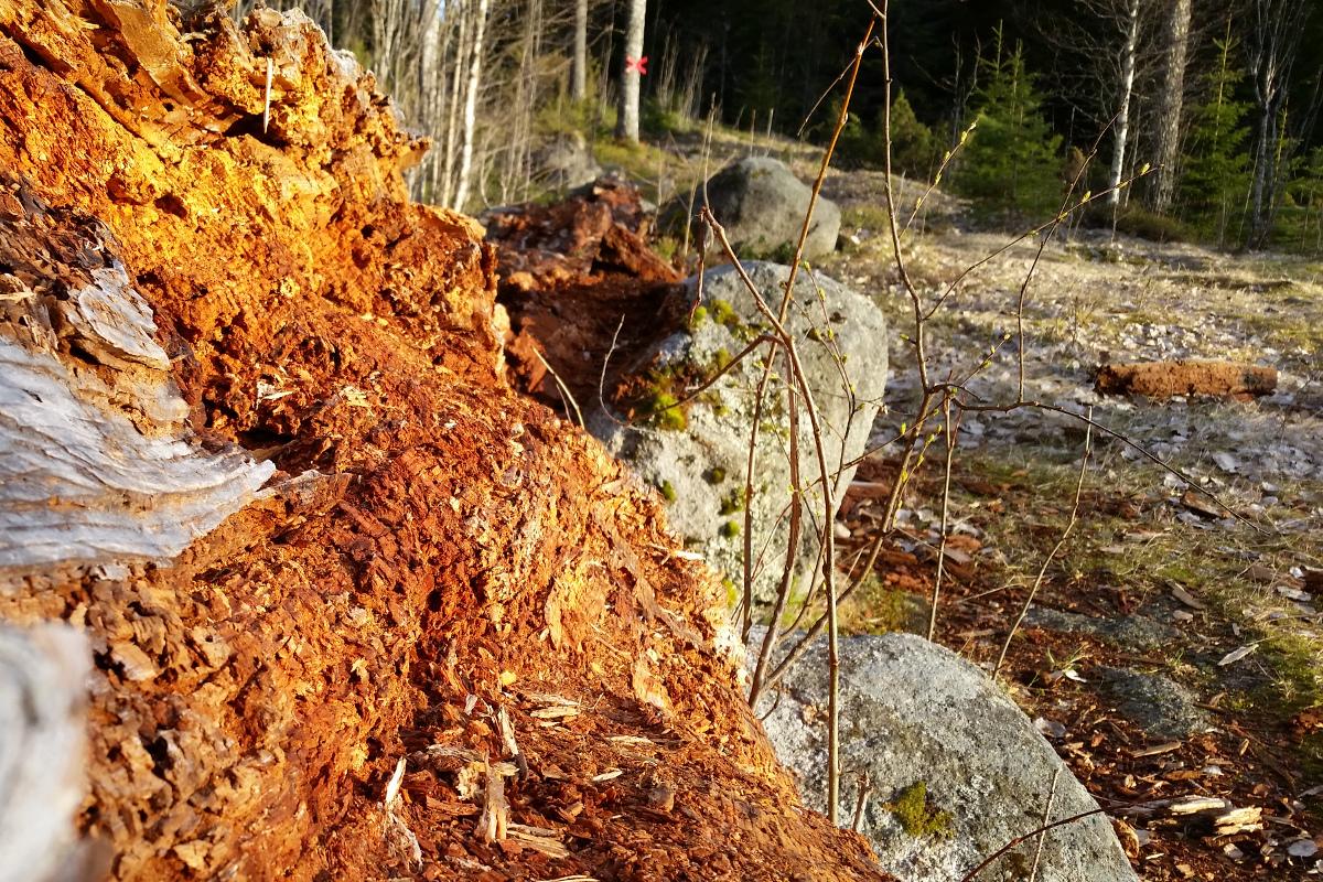 http://www.pererikstrandberg.se/blog/fallen-tree.jpg