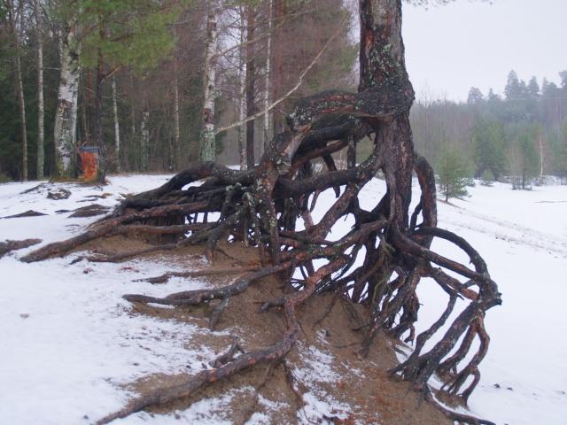 http://www.pererikstrandberg.se/blog/hdr/640_rot_hdr.jpg